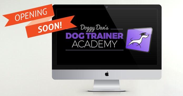 实现你的梦想:成为一名专业的狗训练师