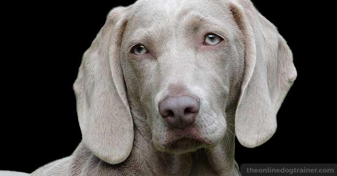 狗收养:何时是采摘狗的最佳时间?