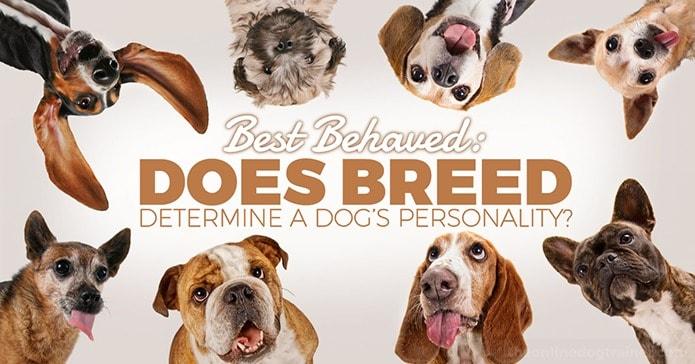 Best Behaved Dog Breeds: Does Breed Determine a Dog's