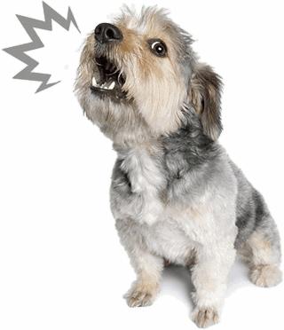 Výsledek obrázku pro dogs png images