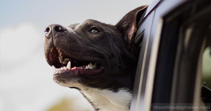 Dog Dental Hygiene:  How to Keep Your Pup's Teeth Clean