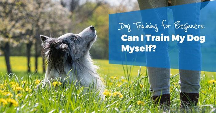 Dog-Training-for-Beginners-Can-I-Train-My-Dog-Myself-HEADLINE-IMAGE