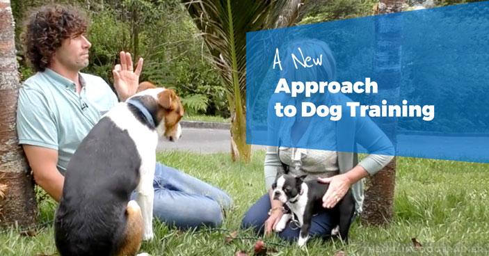 Doggy-Dan-A-New-Approcah-To-Dog-Training-HEADLINE