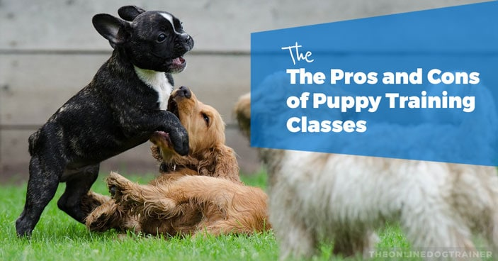The-Pros-and-Cons-of-Puppy-Training-Classes-HEADLINE-IMAGE